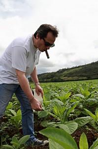 Mitchell Peru Tobacco Field