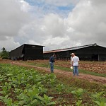 tobacco_field_barn2