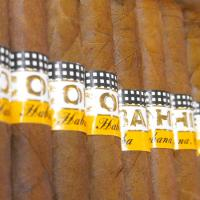 Cohiba Panetelas Cigar - Box of 25